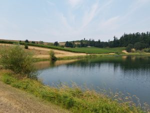Summer Picnic in the Vineyard @ St. Jory Vineyard | Oregon | United States
