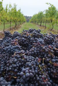 Wine Club Pick-up Harvest Celebration @ Duck Pond Cellars | Newberg | Oregon | United States
