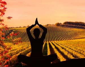 Yoga in the Vineyard @ Duck Pond Cellars